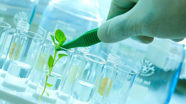 A Nova Biotecnologia para os sectores Agro-Alimentar-Florestal