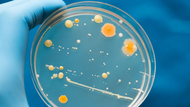 Dia do Microrganismo