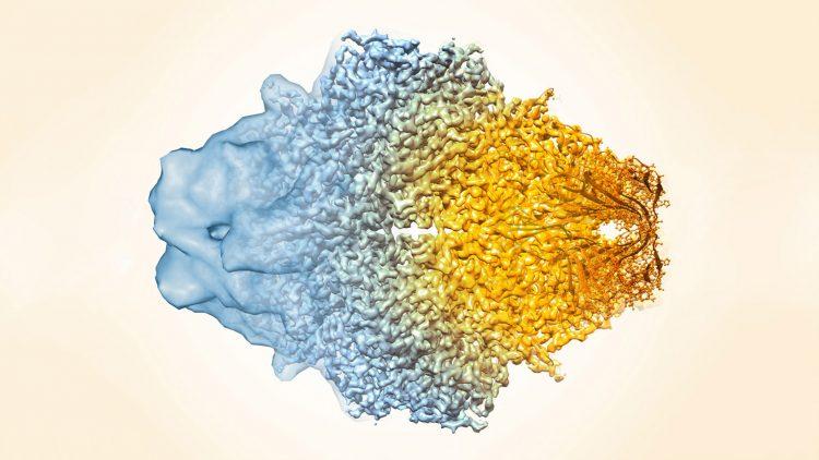 Criomicroscopia eletrónica vence Prémio Nobel da Química 2017