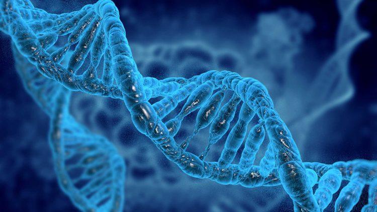 XVI Encontro de Engenharia Biomédica