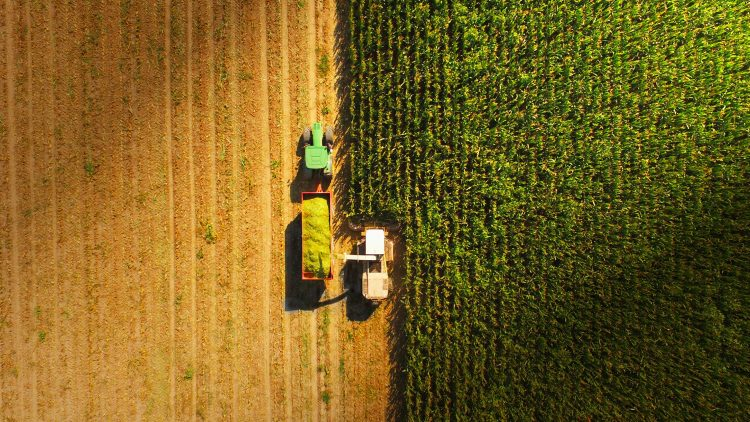 Study by Técnico scientists concludes that current organic farming could not feed the world by 2050